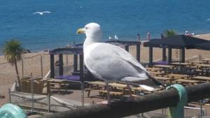 Brighton 2018 (11)